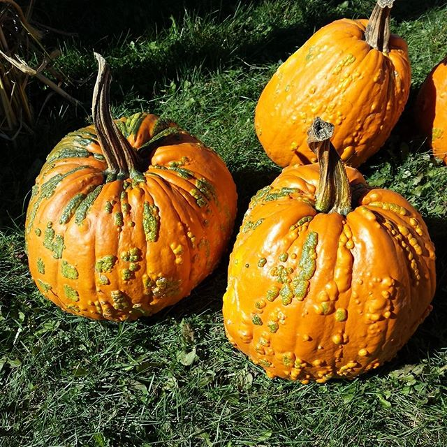 Some very special and unique pumpkins!