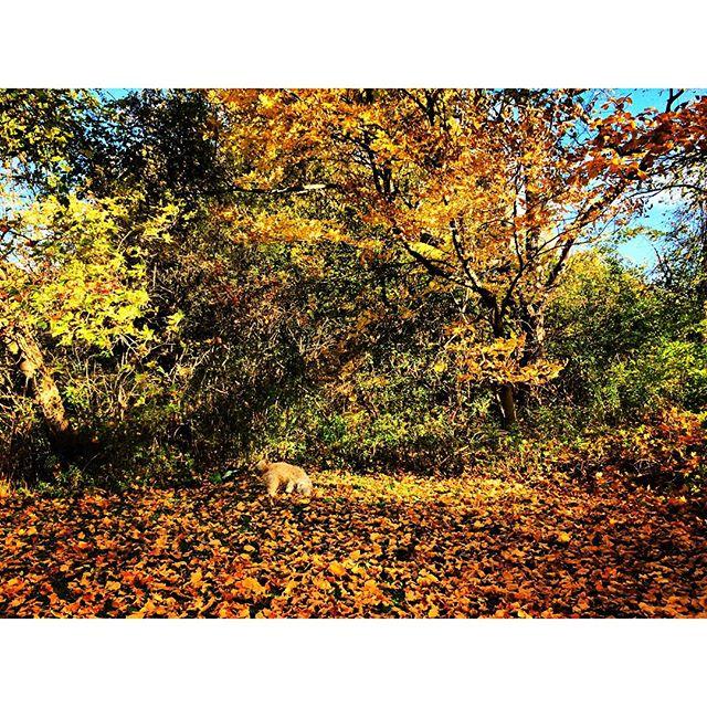 autumn wonderland (feat. bella)