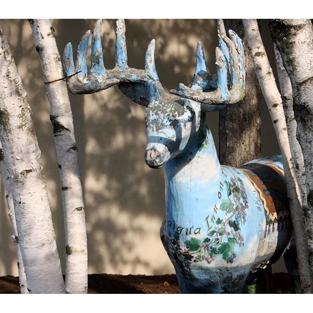 Sometimes you find the quirkiest images in the oddest places. This lovely blue deer sits outside a hotel on the north end of Lake Canadaigua in upstate New York. Caught my eye. #FLXperience, #fingerlakestourism, #bluedeer, #statue,
